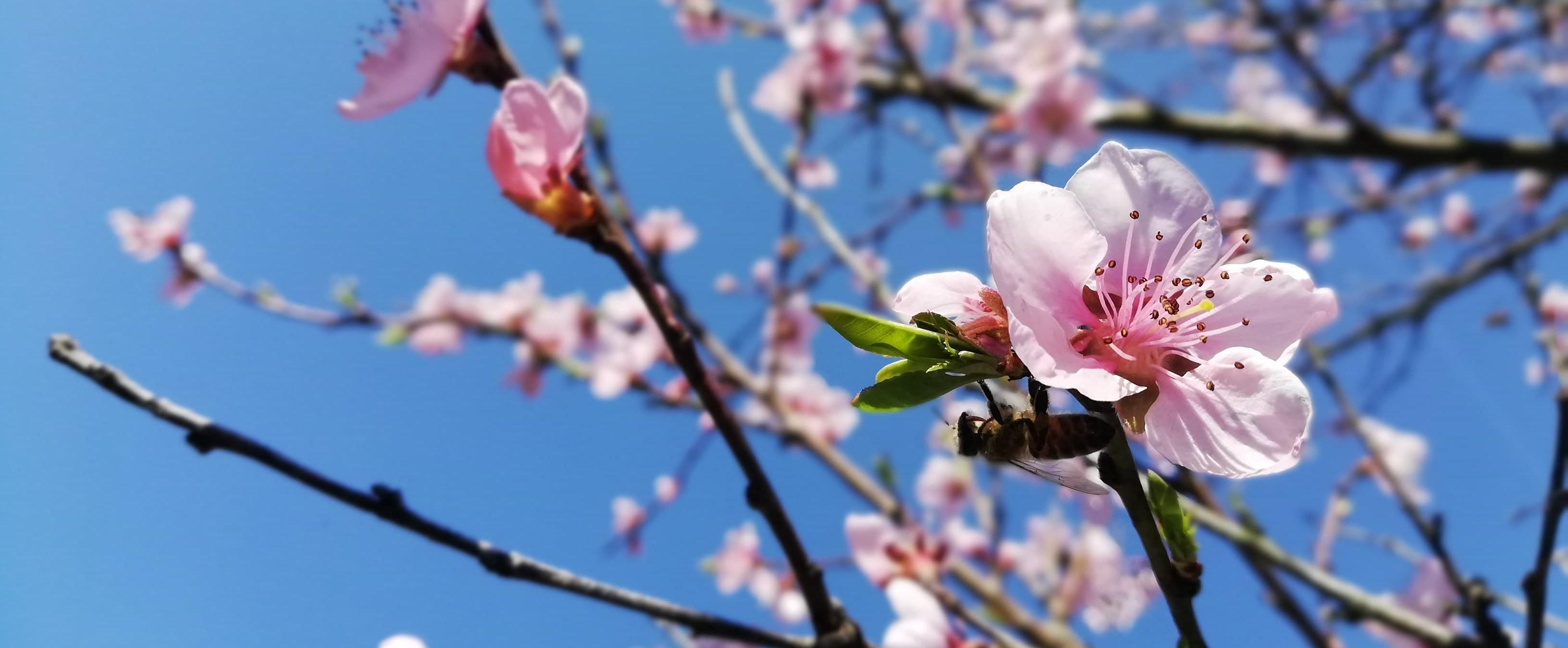 Wiosennie...